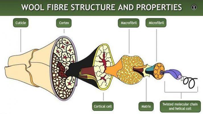 ساختار میکروسکوپی الیاف پشم